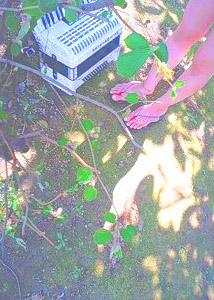 09_spring